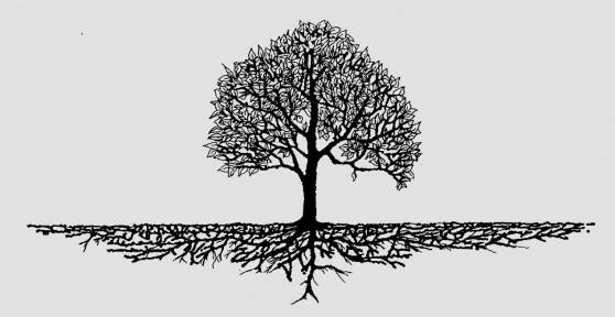 tree- black and white